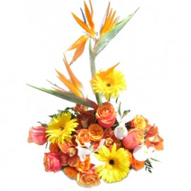 Tropical Journey Bouquet