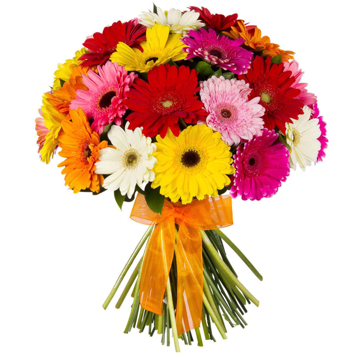 Gerberas Selection