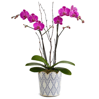 Lovely Living Orchid